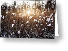 Setting Sun In Winter Forest Greeting Card by Elena Elisseeva