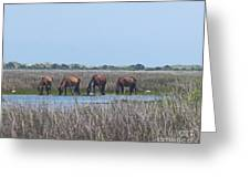 Shackleford Horses And Friends 3 Greeting Card by Cathy Lindsey