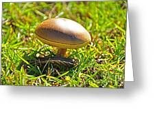 Shade Of The Shroom Greeting Card by Al Powell Photography USA