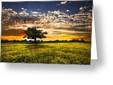 Shadows At Sunset Greeting Card by Debra and Dave Vanderlaan
