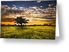 Shadows At Sunset Greeting Card by Debra and Dave Vanderlaan
