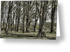 Shady Grove Greeting Card by Jean Noren