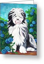 Shaggy Pup Greeting Card by MarLa Hoover
