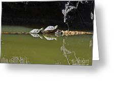 Sharing Sliders Greeting Card by Al Powell Photography USA