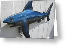 Shark Blue Bull Shark Greeting Card by Robert Blackwell