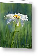 Shasta Daisy Flower With Blue Green Background Greeting Card by Sharon Freeman