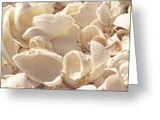 She Sells Seashells Greeting Card by Kim Hojnacki