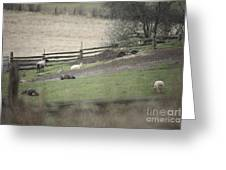Sheep Life Greeting Card by Graham Foulkes