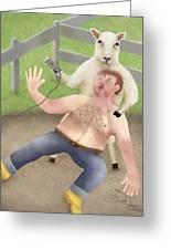 Sheep Shearing Greeting Card by Marlene Watson