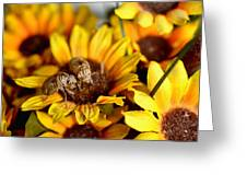 Shell Of A Bug On Flower Greeting Card by Jeffrey Platt