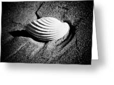 Shell On Sand Black And White Photo Greeting Card by Raimond Klavins