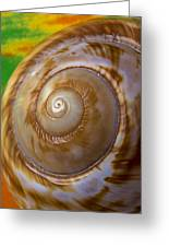 Shell Spiral Greeting Card by Garry Gay