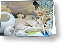 Shells In Pastels Greeting Card by Danielle  Parent