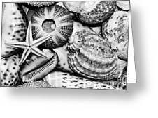 Shellscape In Monochrome Greeting Card by Kaye Menner