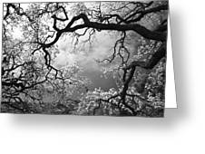 Sheltering Sky Greeting Card by Laurie Search