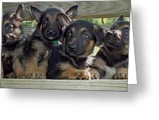 Shepherd Pups 2 Greeting Card by Aimee L Maher Photography and Art Visit ALMGallerydotcom