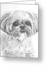 Shih Tzu Portrait In Charcoal Greeting Card by Kate Sumners