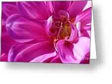 Shimmering Pink Dahlia Flower Greeting Card by Susan Garren