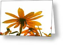 Shine THAT Bright Greeting Card by Lucy D