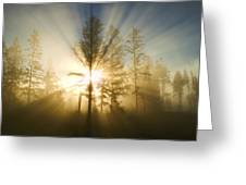 Shining Through Greeting Card by Peggy Collins