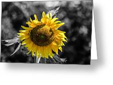 Shining Through Greeting Card by Steven  Taylor