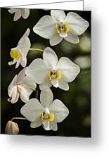 Shinning Orchids Greeting Card by Penny Lisowski