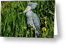 Shoebill Stork Greeting Card by Georgia Mizuleva