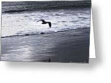 Shore Bird -02 Greeting Card by Gregory Dyer