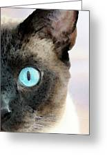Siamese Cat Art - Half The Story Greeting Card by Sharon Cummings