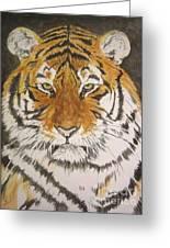 Siberian Tiger Greeting Card by Regan J Smith