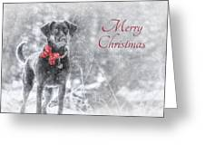 Sienna - Merry Christmas Greeting Card by Lori Deiter