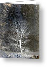 Silent Night Greeting Card by Carol Leigh