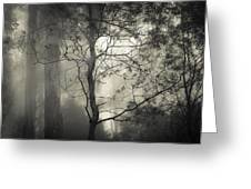 Silent Stirring Greeting Card by Amy Weiss