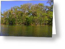 Silver Springs - Old-style Florida Greeting Card by Christine Till