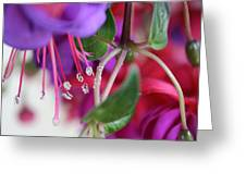 Simple Beauty Greeting Card by Maria Schaefers