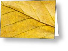 Simply Beech Greeting Card by Anne Gilbert
