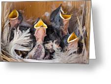 Singing For Supper Greeting Card by Bill Pevlor