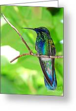Singing In Blue Greeting Card by Maria Martinez
