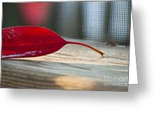 Single Red Leaf Greeting Card by Terry Rowe