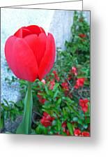 Single Red Tulip Greeting Card by Barbara McDevitt