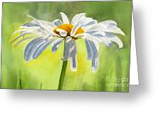 Single White Daisy Blossom Greeting Card by Sharon Freeman