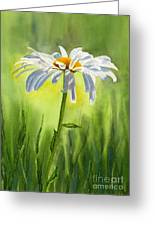 Single White Daisy  Greeting Card by Sharon Freeman