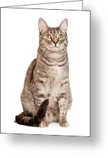 Sitting Gray Tabby Cat Greeting Card by Susan  Schmitz