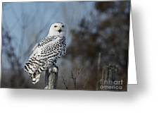 Sitting on the Fence- Snowy Owl Perched Greeting Card by Inspired Nature Photography By Shelley Myke
