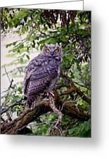 Sitting Owl Greeting Card by Athena Mckinzie