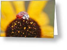 Sitting Pretty Greeting Card by Darren Fisher