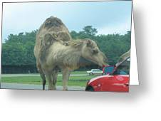Six Flags Great Adventure - Animal Park - 121226 Greeting Card by DC Photographer