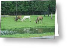 Six Flags Great Adventure - Animal Park - 12128 Greeting Card by DC Photographer
