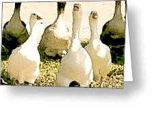 Six Geese and a Duck Greeting Card by Artist and Photographer Laura Wrede