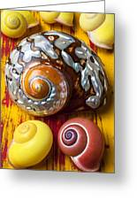 Six Snails Shells Greeting Card by Garry Gay